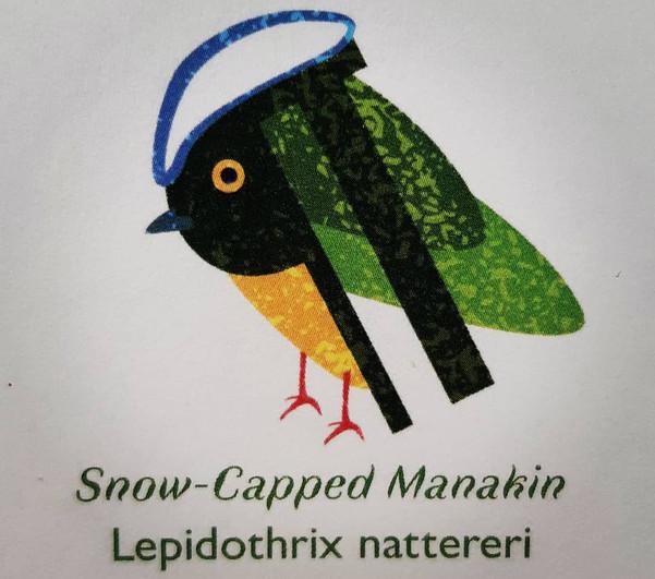 Snow-Capped Manakin Pilcrow