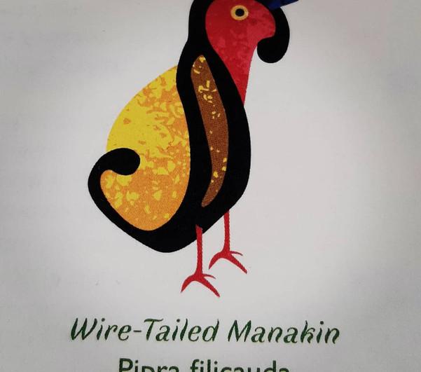 Wire-Tailed Manakin Pilcrow