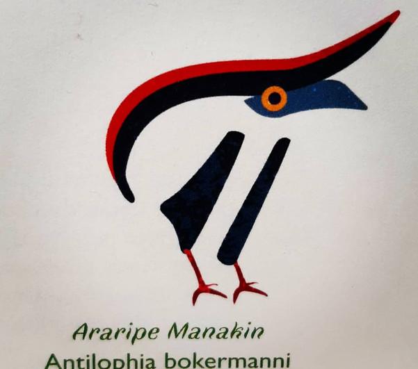 Araripe Manakin Pilcrow