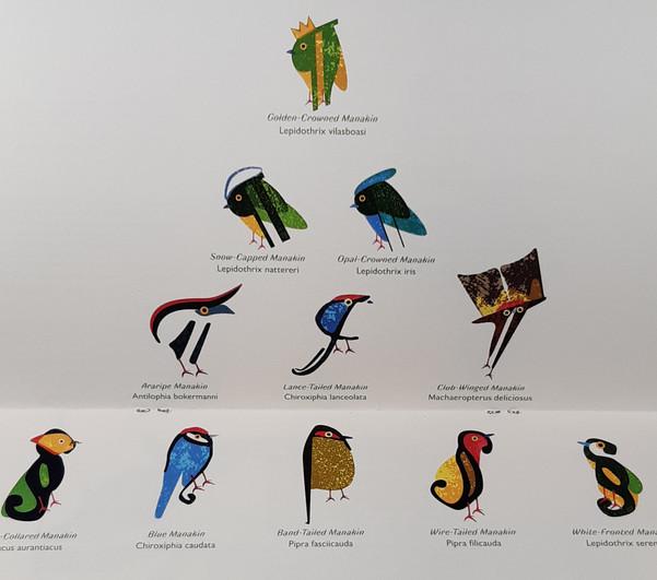 Pilcrow Manaking Birds