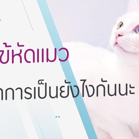 ไวรัสไข้หัดแมว (FPV)