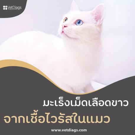 มะเร็งเม็ดเลือดขาว จากเชื้อไวรัสในแมว (FeLV ; Feline Leukemia Virus)