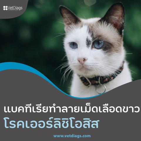 โรคเออร์ลิซิโอสิส แบคทีเรียที่ทำลายเม็ดเลือดขาวใน สุนัขและแมว