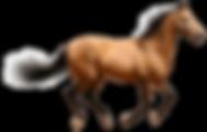 kisspng-horse-desktop-wallpaper-clip-art