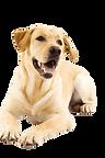kisspng-dog-cat-puppy-pet-veterinarian-g