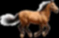 horse-pet-veterinarian