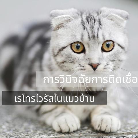 การวินิจฉัยการติดเชื้อเรโทรไวรัสในแมวบ้าน
