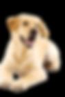 dog-pet-Veterinary