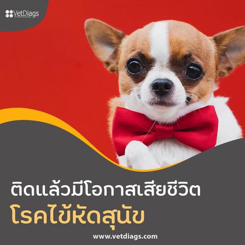โรคไข้หัดสุนัข ติดแล้วมีโอกาสที่สุนัขจะเสียชีวิต