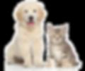 kisspng-dog-cat-kitten-pet-sitting-pet-c