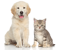 kisspng-dog-cat-kitten-pet-sitting-pet-c