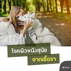 โรคผิวหนังสุนัขจากเชื้อรา.jpg