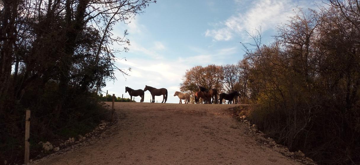 Vie en troupeau - Equi-piste stabilisée avec dénivelé