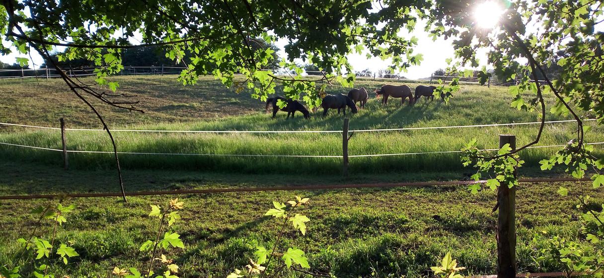 Equi-piste en herbe et paddock en accès libre
