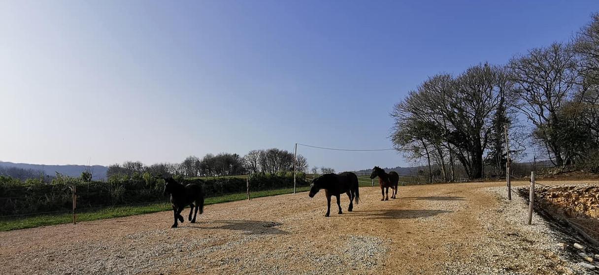 Zone stabilisée qui permet l'évolution des pieds des chevaux et le respect des sols en hiver