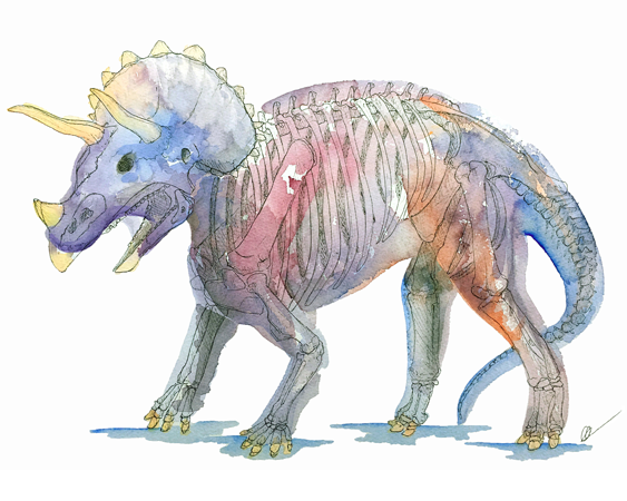X-Ray Triceratops