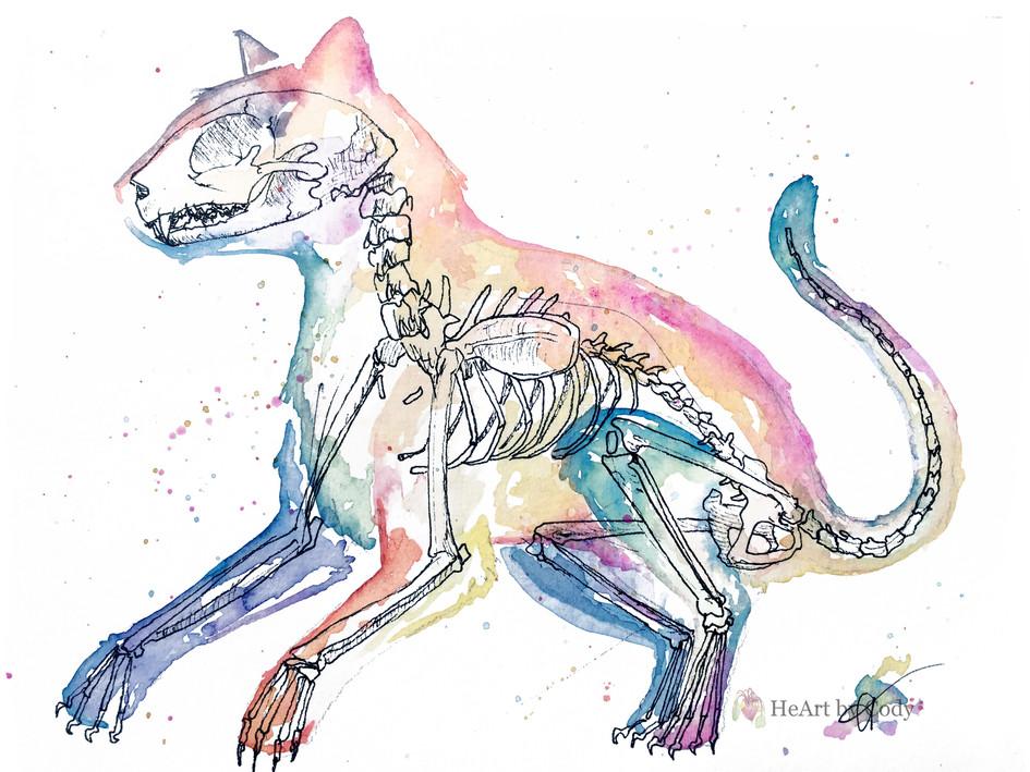 X-Ray Disco Cat