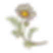 Logo Flower only L (5).png