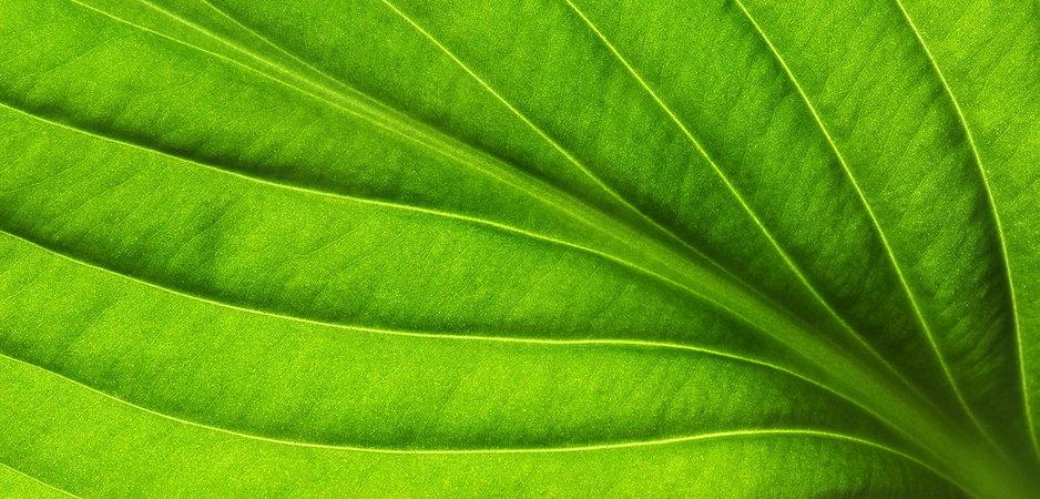 organic-green.jpg