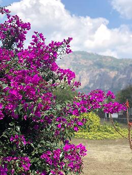 Flowers-1600.jpg