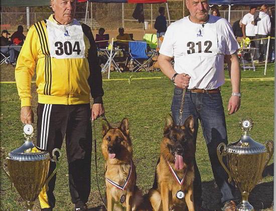 stud-dog-va1-sieger-rocco-vom-mittelwest