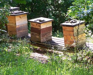 Imkerei, Honig, Wiesbaden, Bienen, wesensgemässe Bienenhaltung, Imker, Brandstetter, Brinskelle, Bad Schwalbach