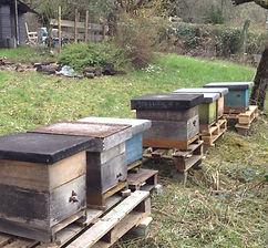Unsere Bienen im Tennelbachtal