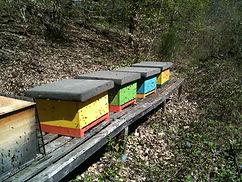 Imkerei, Bienen, Honig, Wiesbaden, Bad Schwalbach