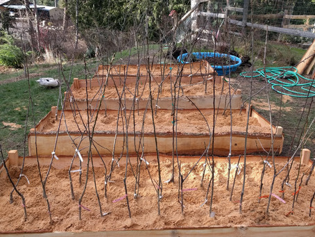 Permaculture Gardening and Landscaping How To Avoid Panic Planting