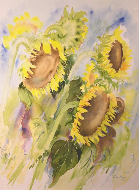 Zonnige bloemen