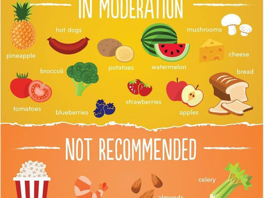 A Chart of Foods from Good to Never for Dogs