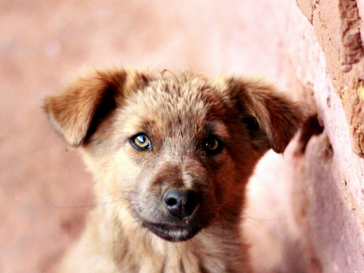 """Socializing Your Puppy: Why """"Later"""" Is Too Late"""