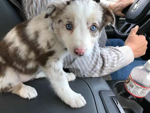 On Her Way Home