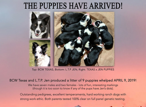 Texas x Jen Puppies Have Arrived!