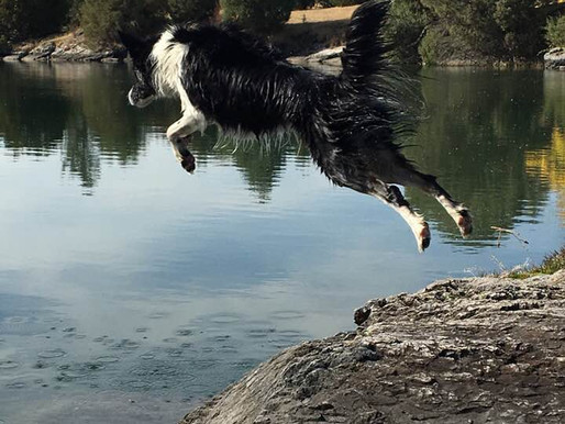MFR River Moon - a water dog!