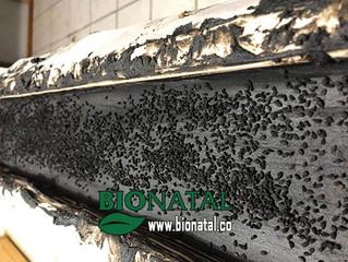 New formula black seed soap