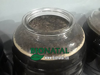 Black seed oil production date