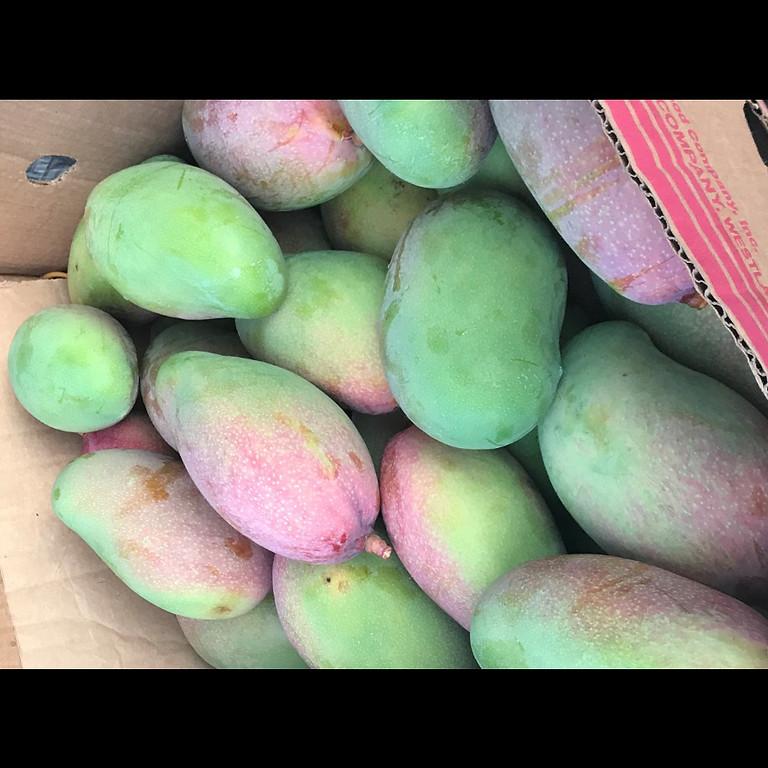 Volunteer to Harvest Mangos
