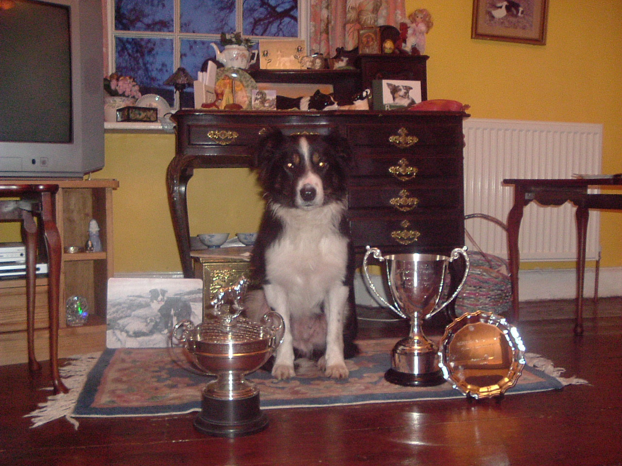 Nursery Final Trophies - Fae.JPG