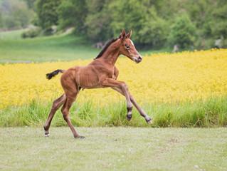 Shooting für Global Foals
