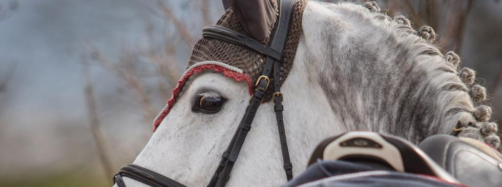 Frühlingsfest der Pferde in Herford