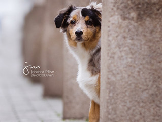 City-Shooting mit Mini Aussie Snickers