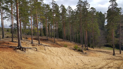 Black lake beach at Karelian isthmus