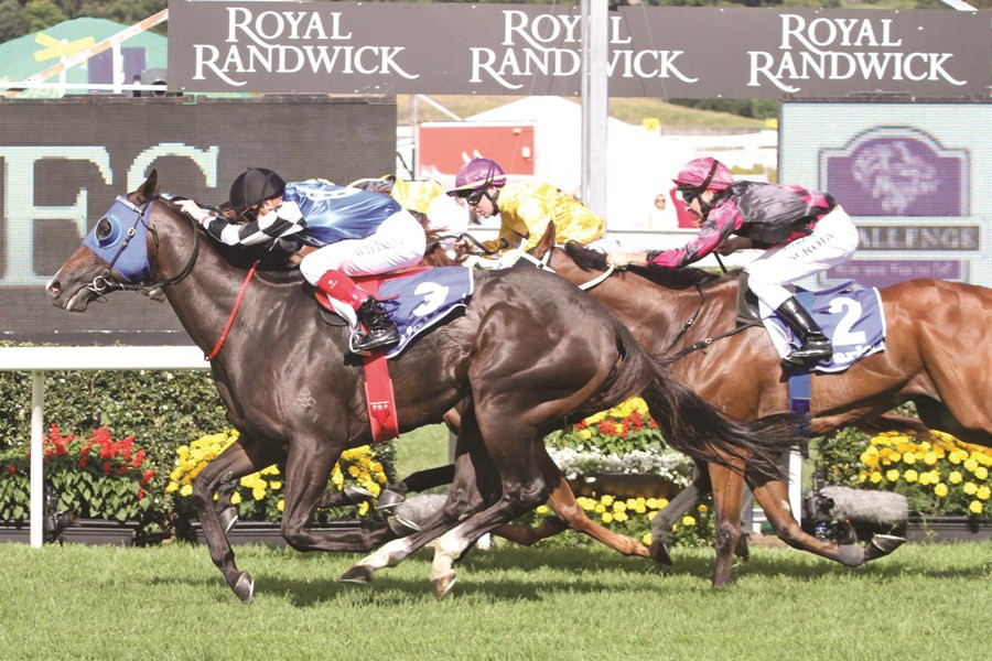 Master Of Design,TJ Smith Stakes,Group 1_14-04-2012_WIN_Randwick_4__350 1.jpg