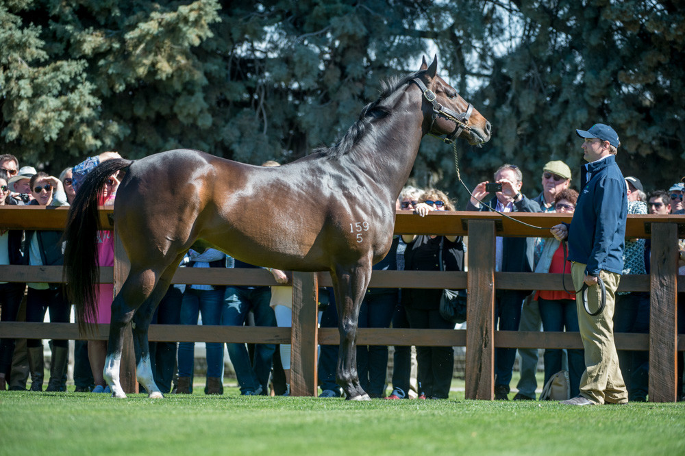 Swettenham Stallion Parade, Master of Design_31-08-14_119.jpg
