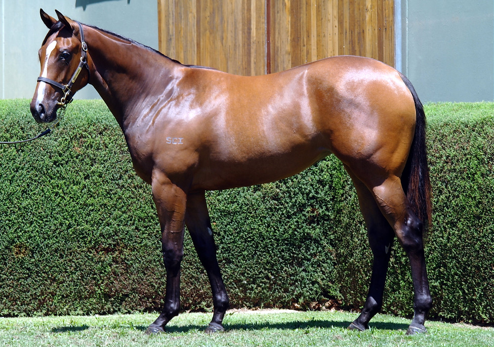 Lot 14 Amoroso x Bel Esprit (Filly).jpg