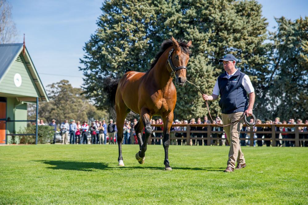 Swettenham Stallion Parade, Equiano_31-08-14_176.jpg