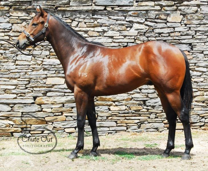 Equiano - Check in Time NZ R2R.jpg
