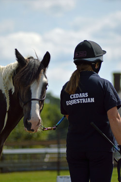 Cedars Equestrian