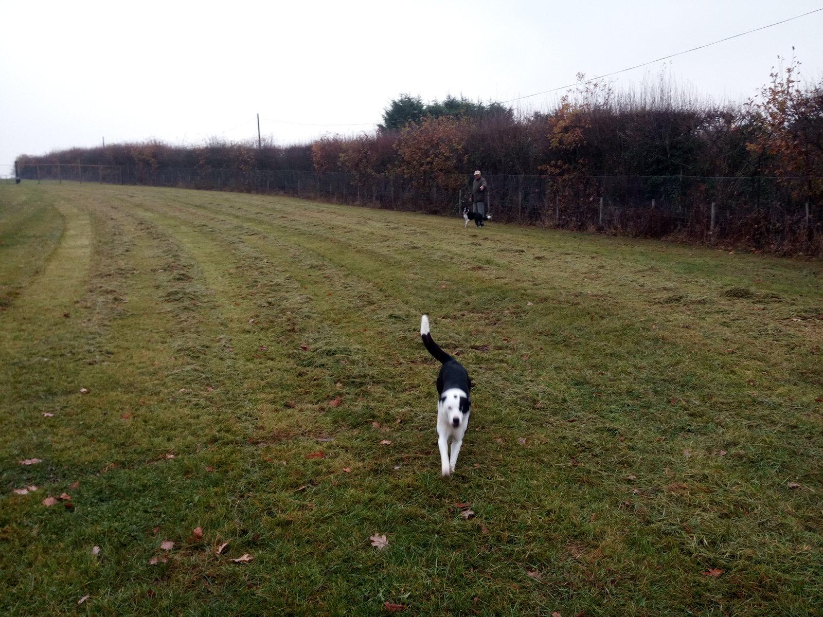 Secure dog walking field hire